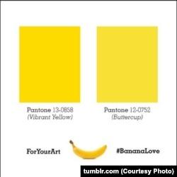 เฉดสีของกล้วยฝั่งขวา จะน่ากินกว่าฝั่งซ้าย ในสายตาผู้บริโภคอเมริกัน