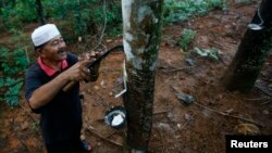 FILE - Roslai Hasan makes incisions on a rubber tree's bark to tap rubber at a plantation at Hulu Rening in the district of Batangkali, outside Kuala Lumpur, May 26, 2014.