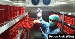 Kondisi tempat penyimpanan darah di PMI Kota Surabaya banyak yang kosong (Foto: VOA/ Petrus Riski)