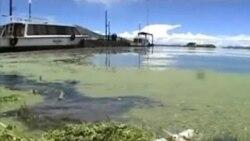 秘魯的的喀喀湖內大批魚類死亡