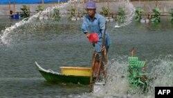 Nhiều phần ở đồng bằng sông Cửu Long bị hạn hán và nước mặn xâm lấn nghiêm trọng.