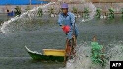 Ở Sài Gòn và vùng đồng bằng sông Cửu long, hạn hán gây ra tình trạng ngập mặn, gây thiệt hại cho mùa màng và làm tăng độ mặn của nguồn cung cấp nước sinh hoạt