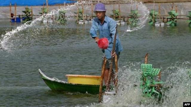 Tại vùng đồng bằng sông Cửu long, hạn hán gây ra tình trạng ngập mặn, gây thiệt hại cho mùa màng và làm tăng độ mặn của nguồn cung cấp nước sinh hoạt.