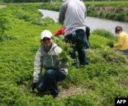 环保活动包括在河岸拔野草