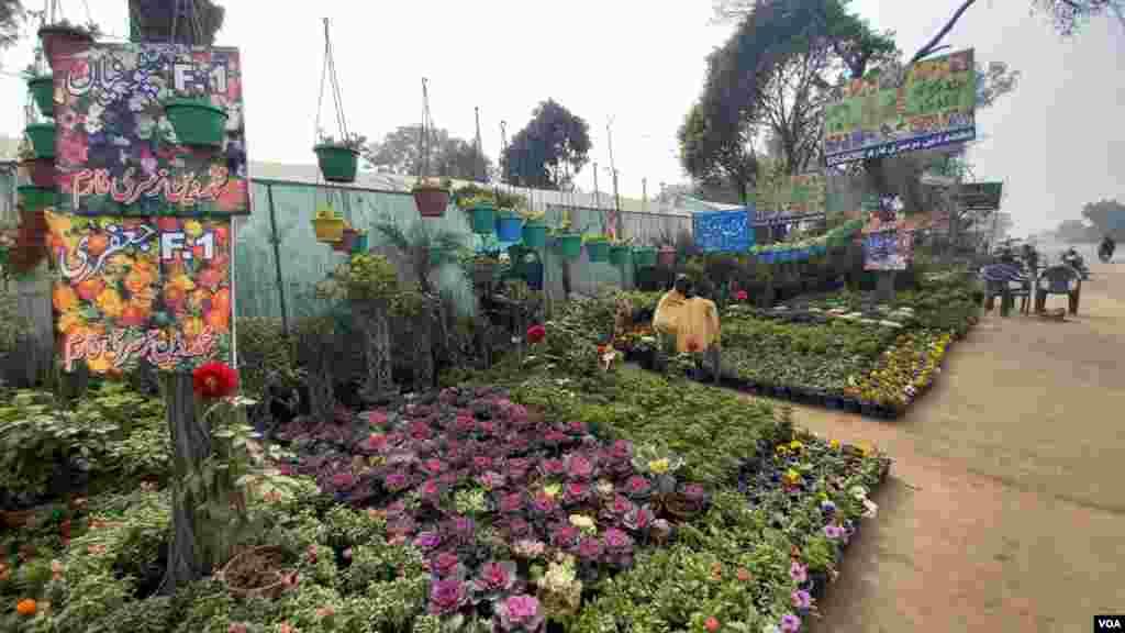پتوکی شہر یہاں موجود کئی نرسریوں کی وجہ سے بھی مشہور ہے۔ جہاں مختلف اقسام کے پودے اور پھول دستیاب ہیں۔
