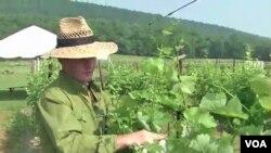 Sebastien Marquet memeriksa tanaman anggur di pertanian Doukenie ,Purcellville, Virginia. (09/06)