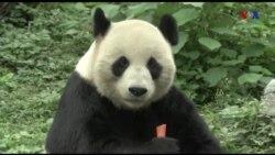 TQ: Chui vào chuồng gấu gây ấn tượng với bạn gái