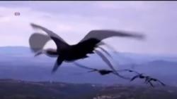 Tại sao một số loài chim bay theo hình chữ V?