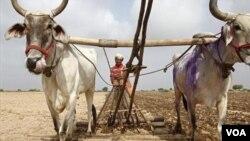 ہندوستان میں خُشک سالی