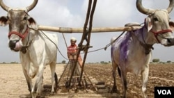 가물어 마른 인도 농경지. (자료사진)