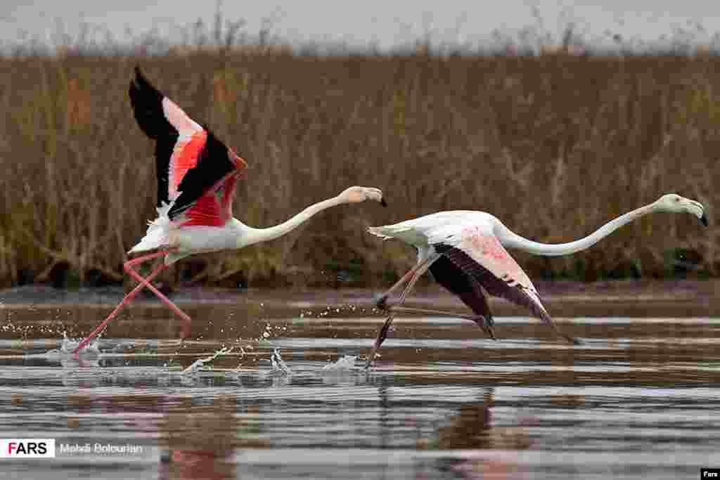 آغاز فصل مهاجرت پرندگان از شمال ایران به سیبری عکس: مهدی بلوریان