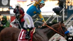 Jockey Victor Espinoza celebrates aboard American Pharoah after winning the 140th Preakness Stakes at Pimlico Race Course in Baltimore, May 16, 2015.