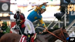 Jockey Victor Espinoza celebrates on American Pharoah after winning the Preakness Stakes in Baltimore, May 2015.(AP Photo/Brynn Anderson)