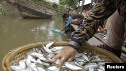 People clean fish on the Mekong riverbank in Phnom Penh December 9, 2011.