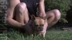 Ученые нашли у собак ген дружелюбия