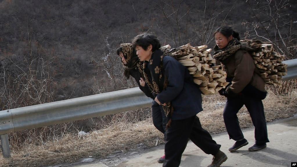 朝鲜黄海北道新坪郡背负木柴的朝鲜妇女