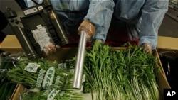 홍콩식품환경위생국 직원들이 홍콩 항공화물터미널에서 일본 수입 야채들에 대해 방사능 오염 검사를 하고 있다.(자료사진)