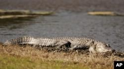 Un segundo caimán estuvo involucrado en ataque a niño de 2 años en Orlando, Florida, en junio.