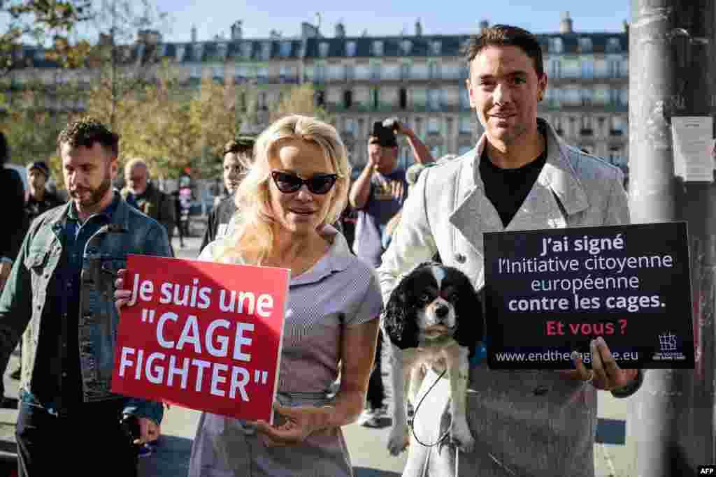 حضور پاملا اندرسون، هنرپیشه سرشناس آمریکایی کانادایی تبار در یک کمپین گروه غیر انتفاعی حمایت از حیوانات در پاریس.