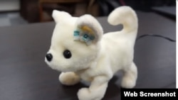 بو سونگھ کر بھونکنے والا جاپانی روبوٹک کتا ۔ ہانا چان