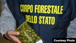 Italian officers recovered more than 85 tonnes of olives which had been 'painted' with copper sulphate solutions to enhance their colour. (Interpol)