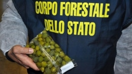Interpoli zbulon ushqime të paligjshme
