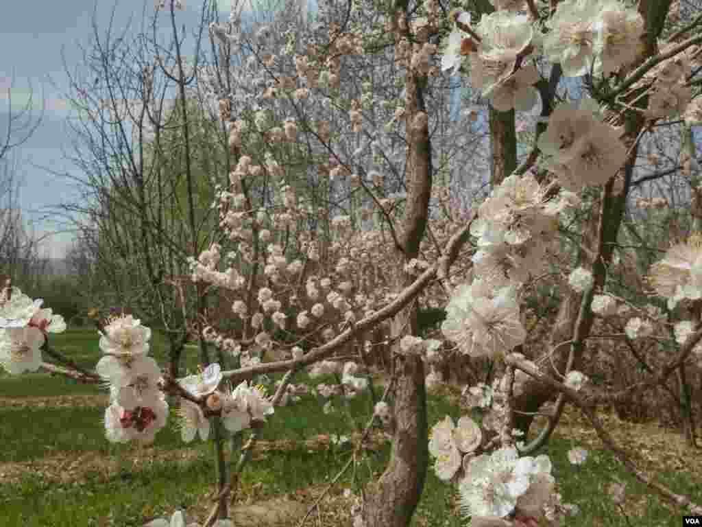 بهار لارگان، شهرستان فلاورجان استان اصفهان عکس: مجتبی (ارسالی شما)