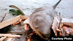 """John Williams wrote the ominous music from """"Jaws,"""" which foreshadowed the impending appearance of the killer shark. (Universal Pictures)"""