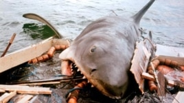 "John Williams wrote the ominous music from ""Jaws,"" which foreshadowed the impending appearance of the killer shark. (Universal Pictures)"