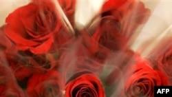 Ulduzlar Valentin gününü necə qeyd edir? (video)
