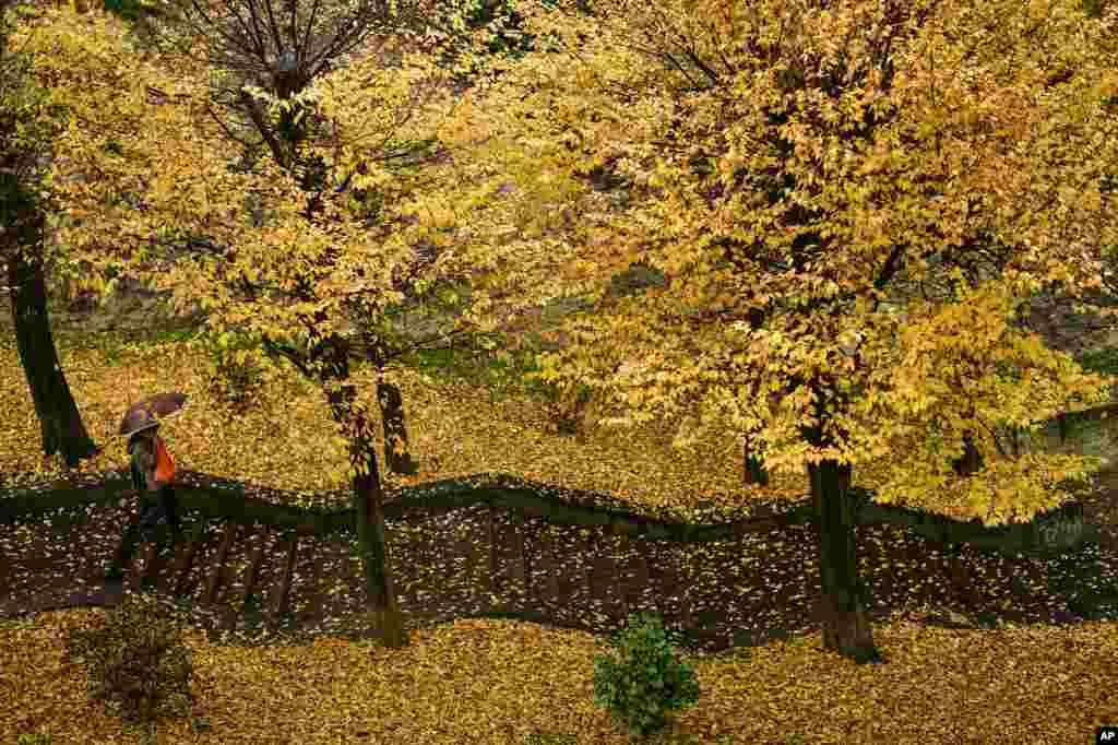 A pedestrian walks down a stairways through a row of  trees during a rainy autumn day, in Pamplona, northern Spain.