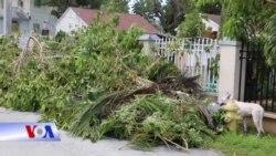 Hậu bão Irma