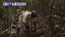 Madagascar: Ishyamba rya Vohibola Ritarinzwe Ryazacika