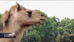Australija: Požari ugrozili životinjski svijet