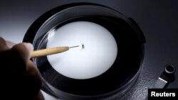 Un laborantin étudie un moustique Aedes aegyti dans un laboratoire, à Guatemala City, 26 janvier 2016.