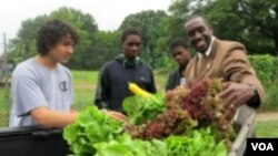 도심에 등장한 친환경 농장