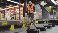 Real sniffer dogs are used at airports throughout the world