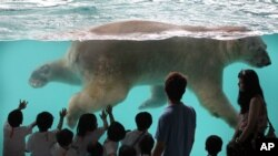 Singapore Polar Bear