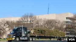 圣诞树到达国会山