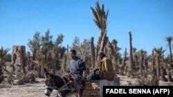 Deux agriculteurs sur une charrette dans l'oasis marocaine de Skoura, une zone rurale d'environ 40 kilomètres carrés, le 27 janvier 2020. (AFP/Fadel Senna)