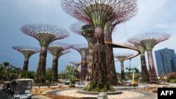 'Siêu cây' trong công viên 'Gardens by the Bay' ở Singapore