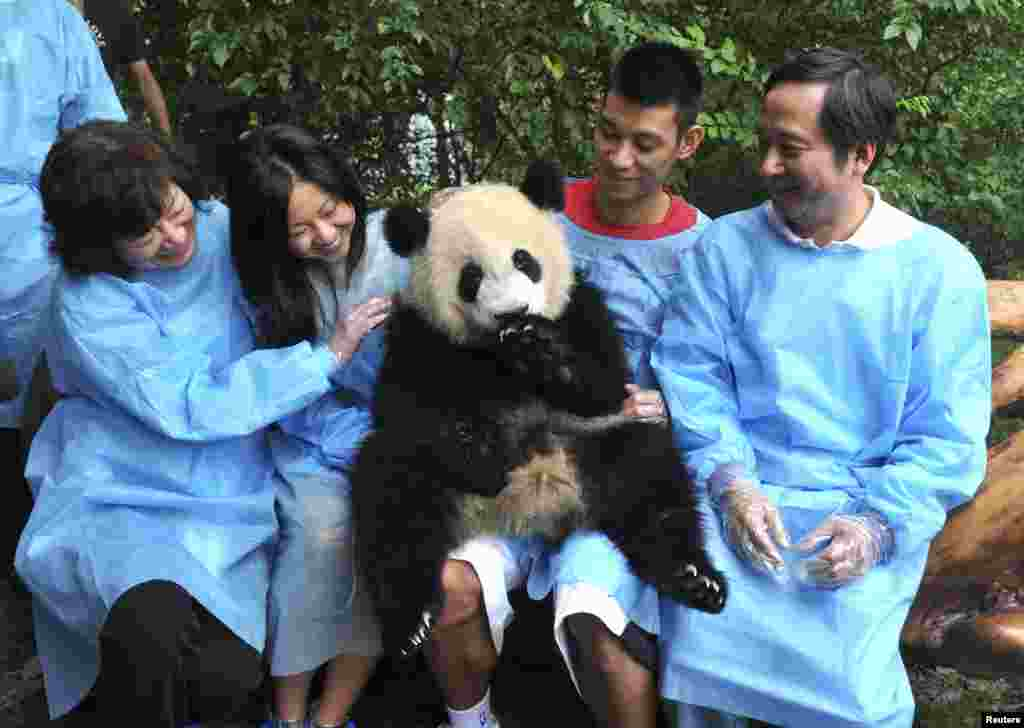 Houston Rockets basketball player Jeremy Lin (2nd R) holds a giant panda at Chengdu Research Base of Giant Panda Breeding in Sichuan province, China.