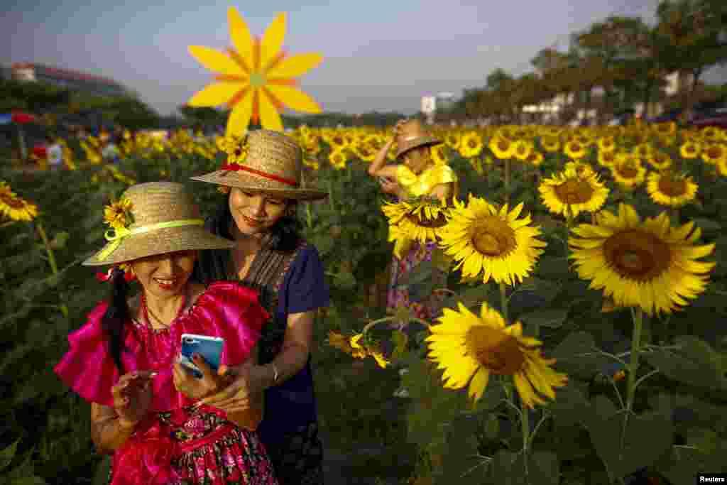 سلفی در مزرعه گل آفتابگردان در بانکوک