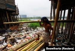 Ujang Ahmad membawa tiang bambu untuk memperbaiki rumahnya yang rusak di kawasan kumuh dekat waduk Pluit, Jakarta, 22 Februari 2012. Presiden Joko Widodo meminta kemiskinan dientaskan pada 2024.(Foto: REUTERS/Beawiharta)