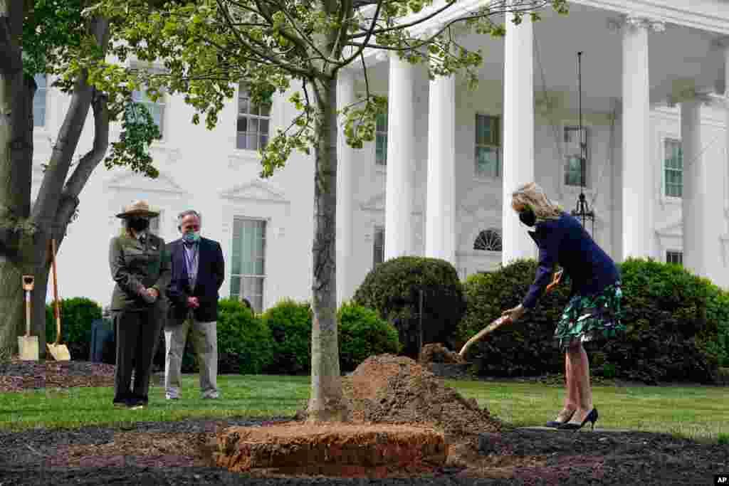 شرکت جیل بایدن بانوی اول آمریکا، در کاشت یک درخت در روز درختکاری، در کاخ سفید
