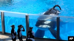 SeaWorld Reports a Very Sick 'Blackfish'