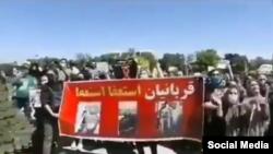 تصویری از تجمه روز گذشته در مخالفت با سگ کشی در تبریز