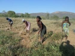 UNITA condena partidarização da agricultura no Namibe - 2:37