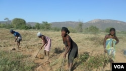 Angola agricultura camponeses