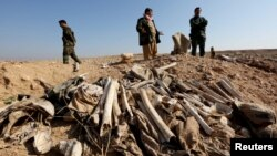 FILE - Bones, suspected to belong to members of Iraq's Yazidi community, are seen in a mass grave on the outskirts of the town of Sinjar, Nov. 30, 2015.